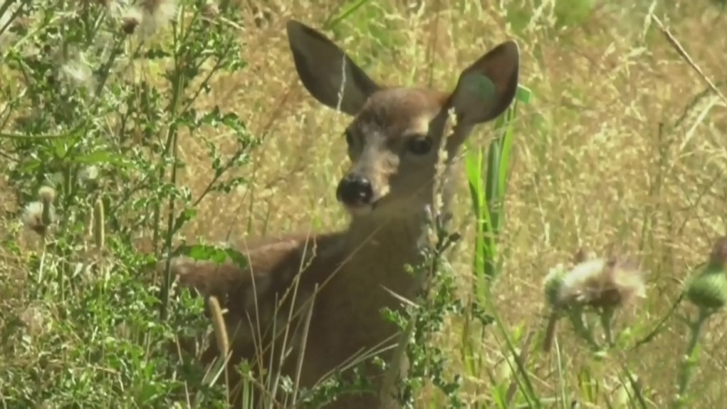 New details emerge after fawn seized at B.C. home