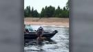 CTV National News: Fisherman rescues moose