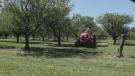 F2F: Delhaven Orchards on Kubota