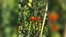 Picture This: Vegetable Garden