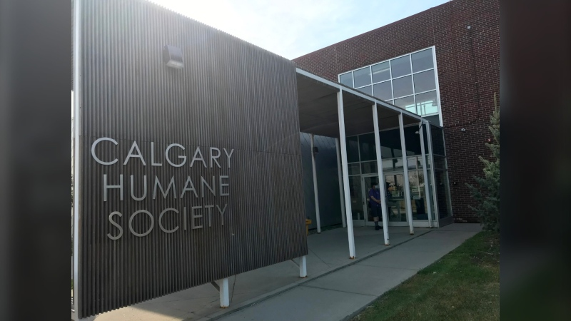 Two women are facing charges after an investigation by the Calgary Humane Society and Calgary police (File photo)
