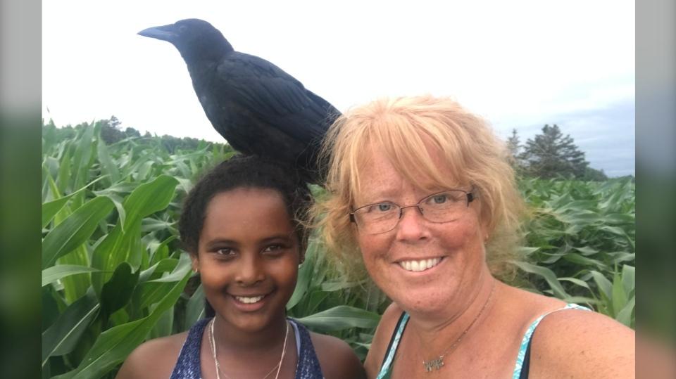 crow killed