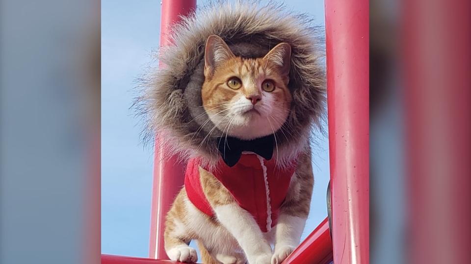 Tom the cat