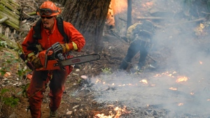 A member of a California Dept. of Corrections fire crew runs along a containment line with a chainsaw while fighting the CZU August Lightning Complex Fire, Friday, Aug. 21, 2020, in Bonny Doon, Calif. (AP / Marcio Jose Sanchez)