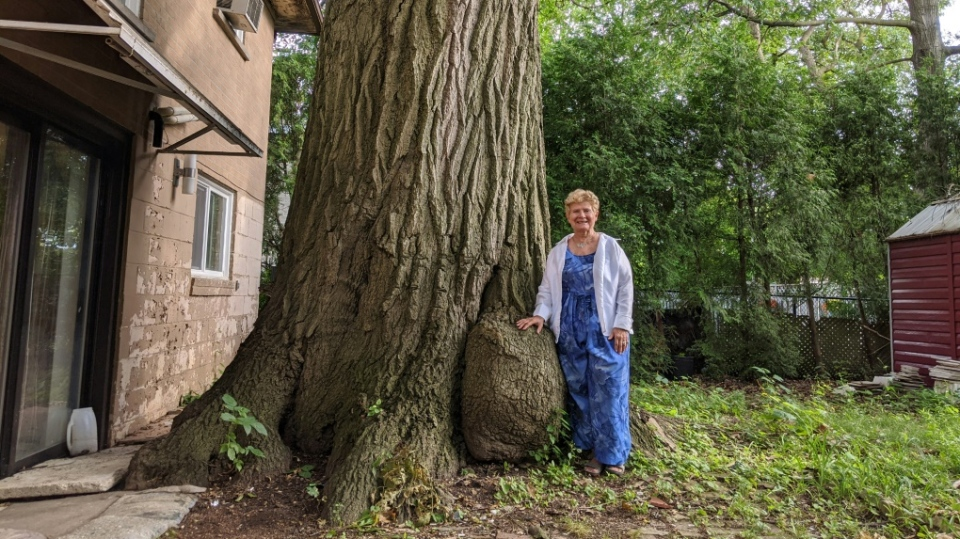 Local North York,  Ont. resident Edith George stands next to the oak tree, which she spent 14 years lobbying to preserve. (AFP)