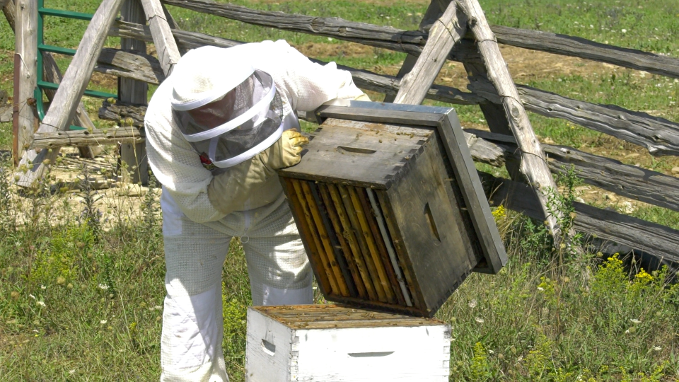 Craig Theriault tending to the new hive on his farm. (Nate Vandermeer / CTV News Ottawa)
