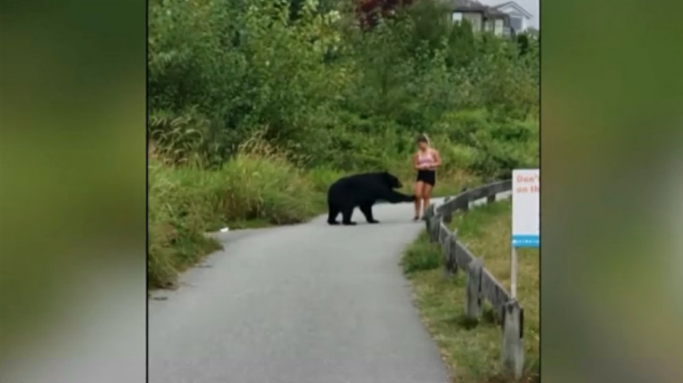 Conservation officers have closed the upper portion of a popular Coquitlam trail after a black bear approached a hiker and took a quick swing at her leg.