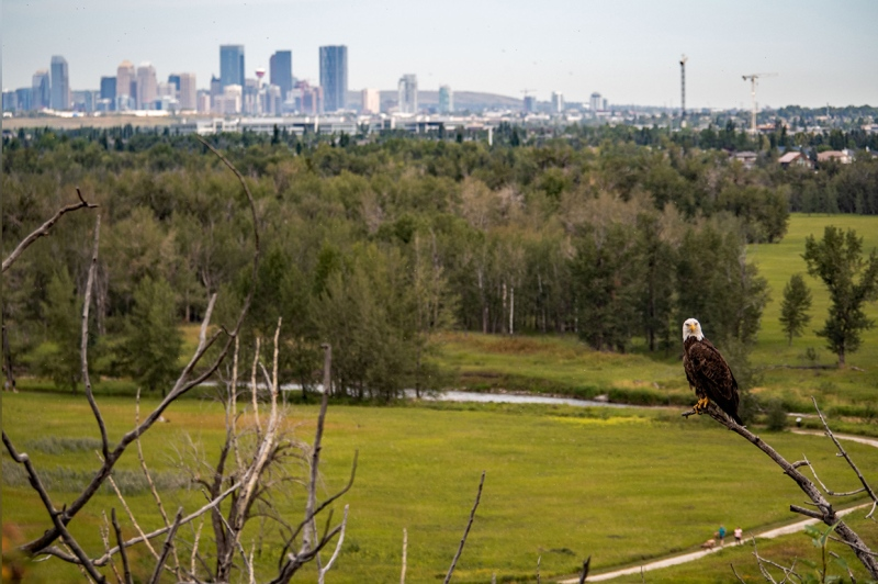 Postcards will be hidden in parks and green spaces around the city as part of a scavenger hunt. (File photo)