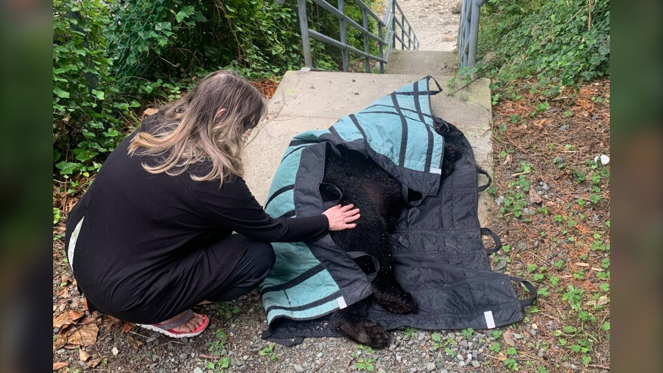 Nancy Bleck says conservation officers euthanized the bear on site. (Nancy Bleck photo)