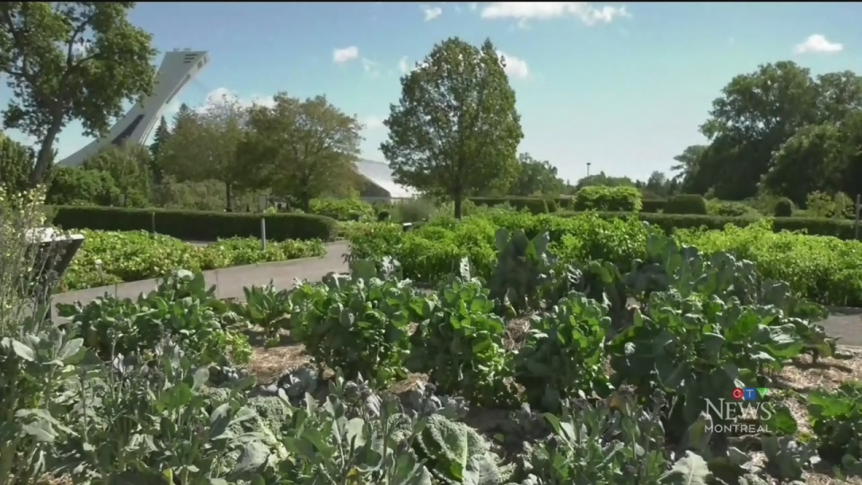 Montreal's botanical garden will be giving away food grown over the summer to those in need