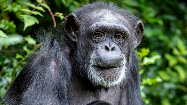 Scientists predict 'unprecedented magnitude' of mammal extinctions in near future