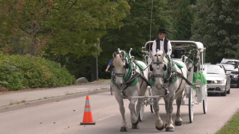 Horse-drawn carriages caused traffic jams in Stanley Park when one lane of traffic was closed this summer.