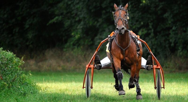 A trotting horse with a sulky takes a curve during competition in this undated file photo.