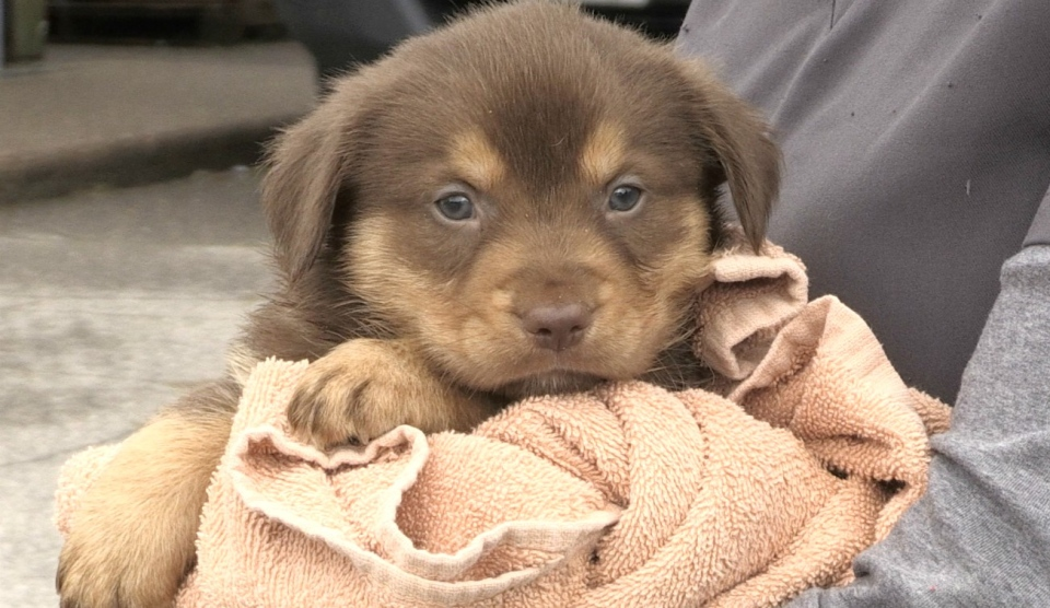 Puppy main