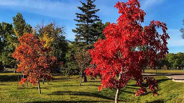 A beautiful day at St. Vital Park. Photo by Ray Cloutier.