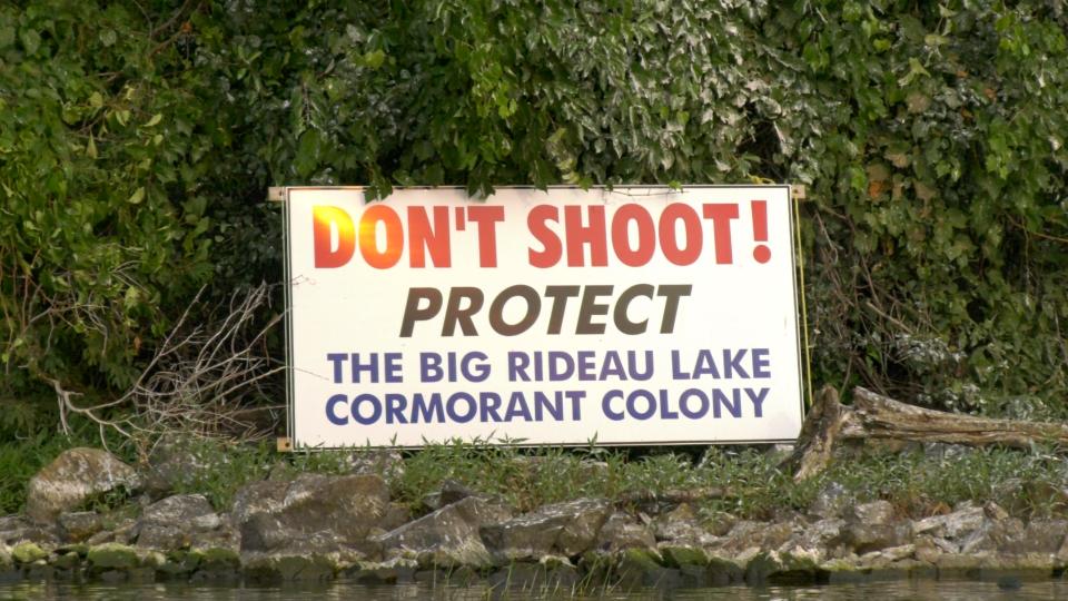 Big Rideau Lake Cormorant Colony