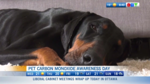 Carbon monoxide poisoning in pets