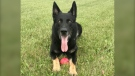 """The RCMP says Fergus is """"on the road to a full recovery"""" after his injury on July 22 during a search for a man suspected of stabbing a Bridgewater police officer. (Nova Scotia RCMP)"""