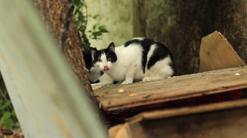 New cat rescue preparing for winter
