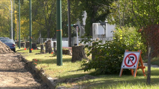 The City of Prince Albert has removed trees on 12th Street East. (Lisa Risom/CTV Prince Albert)