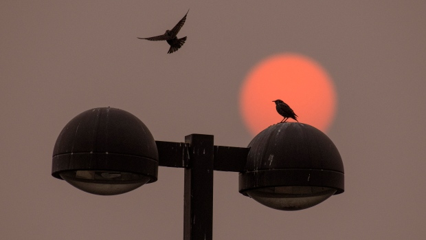 As the red sun coloured by Western wildfires rises, a bird joins another on top of a light post in Walla Walla, Wash., on Sept. 16, 2020. (Greg Lehman / Walla Walla Union-Bulletin via AP)