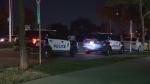 Edmonton police cars parked on a summer night. (CTV News Edmonton)