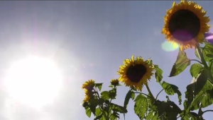 Saskatoon forecast September 18