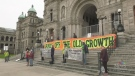 Protestors rally for B.C. old growth protection