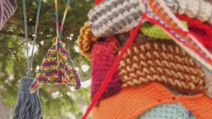 """It's kinda like 'Where's Waldo'?"" Adam finds out why a trio of 'yarn-bombed' trees in Saanich is set to unravel."