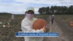 Fall tourism season underway