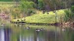 Helm Pond in Edmonton.