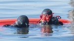 Divers search for trash in the St. Lawrence River in Montreal, Saturday, September 19, 2020, during an annual cleanup day along the river and surrounding parks. THE CANADIAN PRESS/Graham Hughes