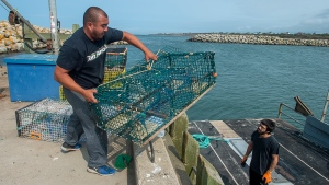 Members of the Sipekne'katik First Nation load lobster traps on the wharf in Saulnierville, N.S., after launching its own self-regulated fishery on Thursday, Sept. 17, 2020. The First Nation says a 1999 Supreme Court of Canada ruling, known as the Marshall decision, granted the Mi'kmaq the right to catch and sell lobster outside of the regular fishing season. THE CANADIAN PRESS/Andrew Vaughan
