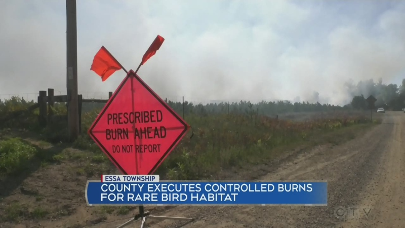 Creating conditions for a rare bird