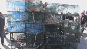 """No laws were broken. We retrieved improperly tagged fishing gear from a closed lobster breeding ground and prevented the ecological destruction that's been taking place here,"" says Bay of Fundy Inshore Fishermans Association president, Colin Sproul. The fact that we had to go do that is entirely on the [Fisheries] Minister's shoulders."""