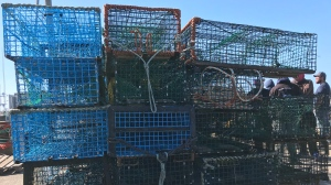 Commercial fishermen pulled hundreds of lobster traps set by fishermen from the Sipekne'katik First Nation out of the water in Saulnierville, N.S., on Sept. 20, 2020.