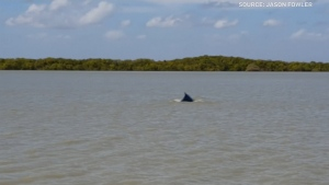 A humpback whale that was lost in a remote Australia river has made its way back to sea in time for the annual migration towards Antarctica.