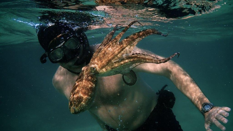 Craig Foster spent a year with an octopus. (Ross Frylinck/Sea Change Project/CNN)