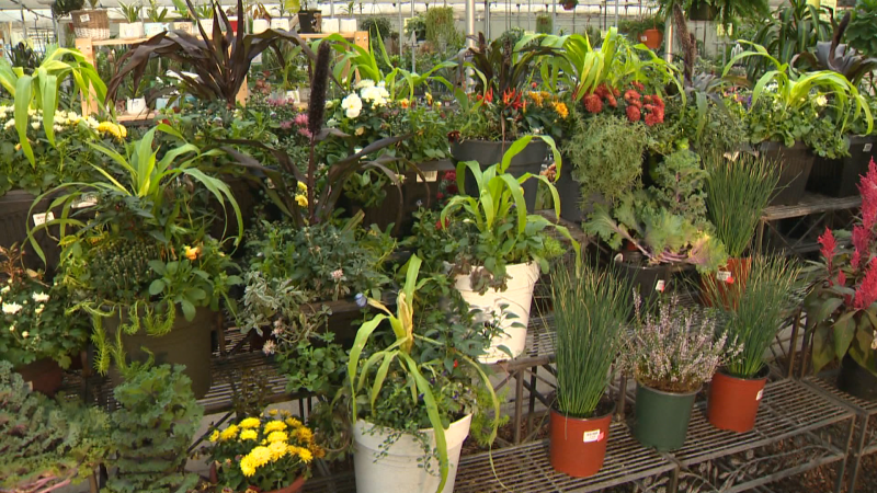 We visit Golden Acre Home and Garden to learn about putting in some fall colours and plants in your outdoor spaces