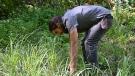 Kayoki Whiteduck harvesting lemongrass to make his hand-crafted loose leaf herbal teas. (Joel Haslam/CTV News Ottawa)