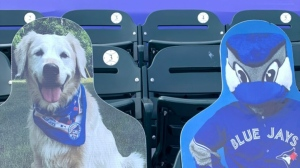 A cardboard cut-out of Benji is seen at the Toronto Blue Jays game.