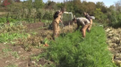 The fields at Hayes Farm are the classroom, where future farmers learn to grow and harvest crops within city limits, with a focus on how to create healthy soil.
