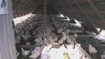 Cookstown farm