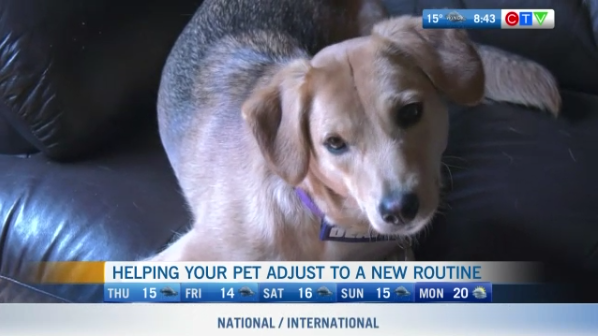 Pet routine, adjusting your pet