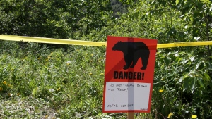 In this file photo, a bear sign and police tape mark a site near a bear attack near Eagle River, Alaska, Wednesday, June 20, 2018. (AP Photo/Mark Thiessen)