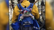 A Baby Yoda doll donated by a 5-year-old Oregon boy is making the rounds in state fire camps and cheering up fire crews.