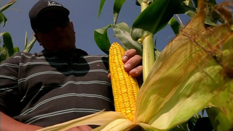 Fields to Forks: Corn to hand sanitizer