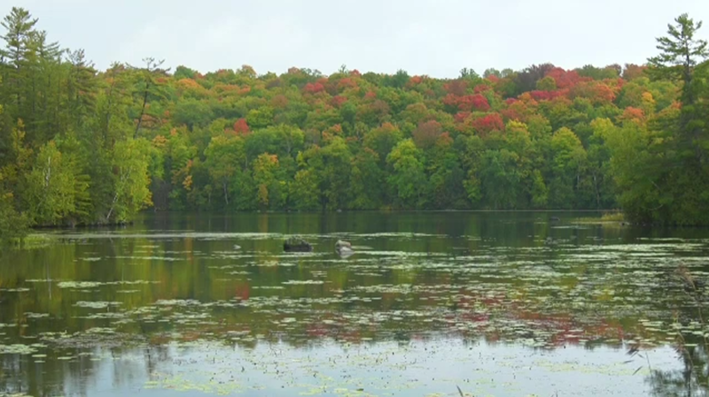 Fall colours on Sept. 24, 2020. (Dylan Dyson/CTV News Ottawa)