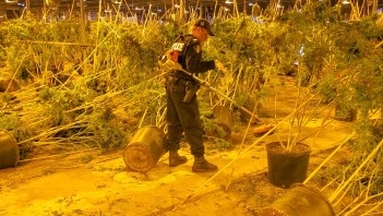 OPP at the site of an illegal cannabis operation in Norfolk County. (Source: OPP)