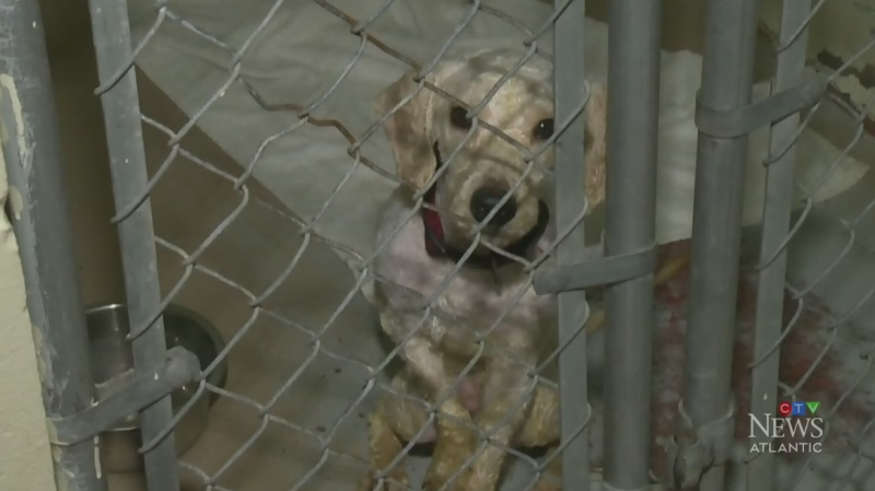 The Nova Scotia SPCA says a 72-year-old Halifax wo